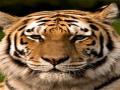 Dunbar Tigers Classic  Invitational