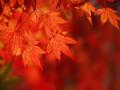 USATF-NJ Fall Foliage Youth XC