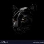 Panther Runner Club GA, USA